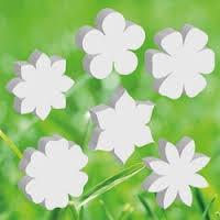 Bloemen | Planten
